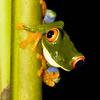 Travel Shots of Costa Rica-208