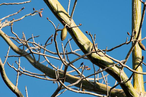 Pod tree