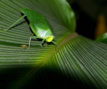 2008 Costa Rica 0249