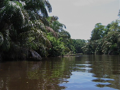 Tortuguero, Costa Rica.