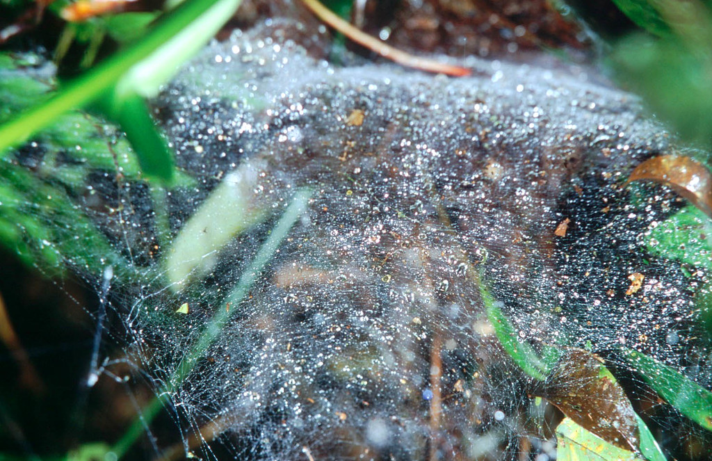 Spider Web in Los Angeles Cloud Forest in Costa Rica