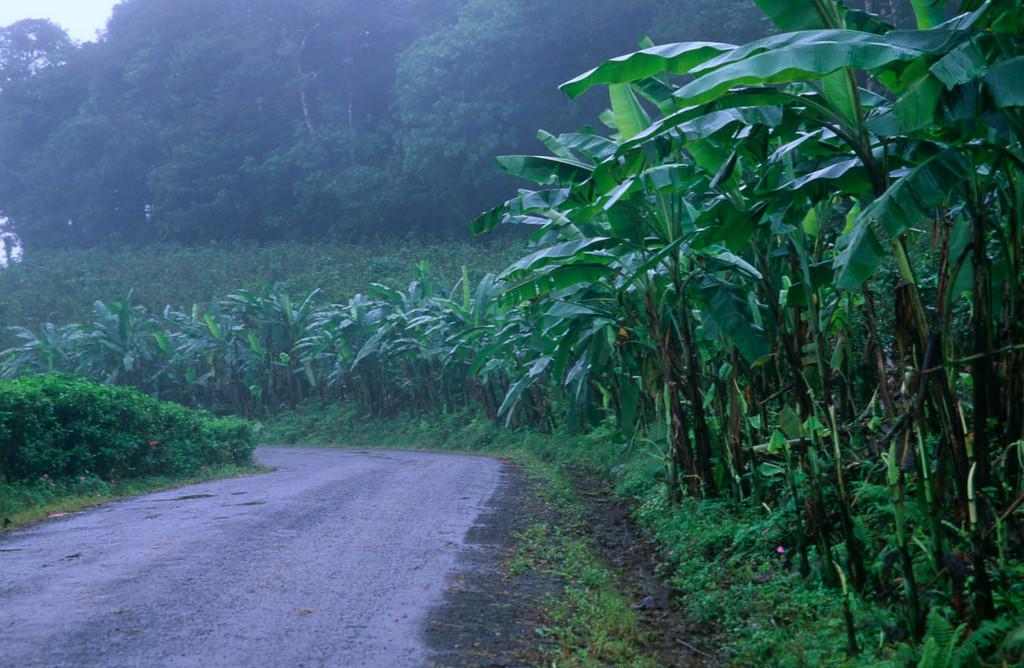 Wet roads in Costa Rica