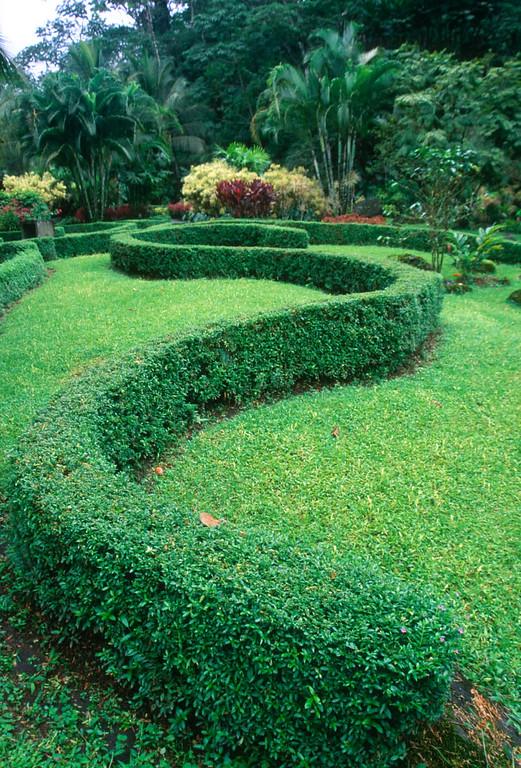 Tabicon S bush in Costa Rica