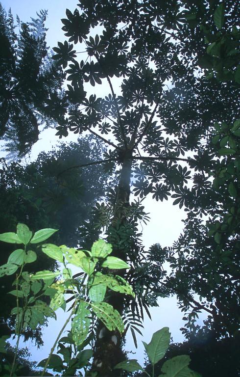 Jungle rain in Los Angeles Cloud Forest in Costa Rica