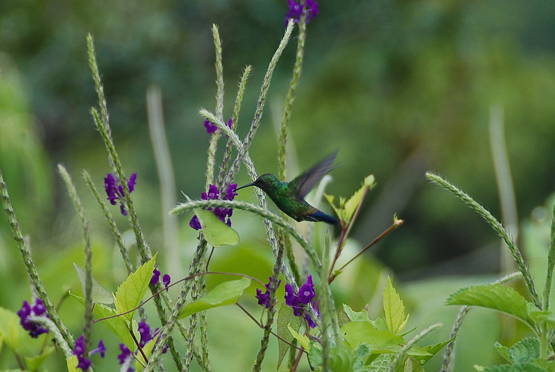 Hummingbirds are not cooperative photographic subjects.