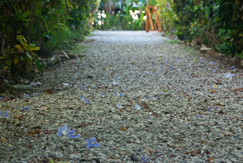 Each morning, the path leading away from my room was decorated with fallen flowers from the previous evening.