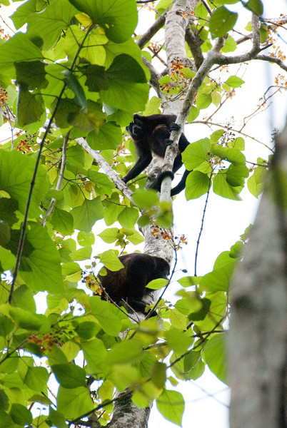 Howler monkies cheered for us as we returned.