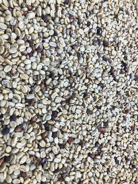 Coffee Beans before Roasting