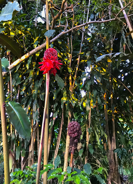In Coffee Plantation, Finca Rosa Blanca