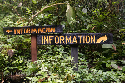 Information?, Monte Verde Cloud Forest, Costa Rica
