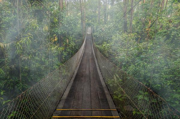 Hanging Bridge - Costa Rica