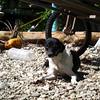 skinny dog at Cabuya beach