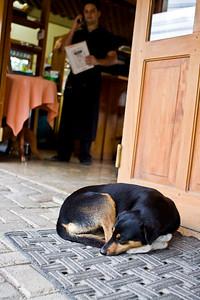 Dog guarding (?) a restaurant