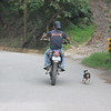 Following his dad on a road