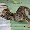 kitten on the roof stretching