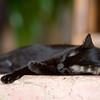 A cat at Amor Del Mar in Montezuma, Costa Rica