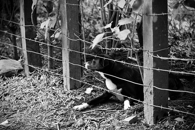 A dog looking out from a fence
