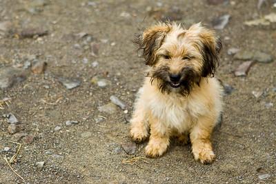 Cute dog at Monteverde info center