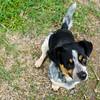 dogs at Monteverde info center
