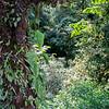 Coricancha reserve park - Monteverde area