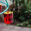 Hummingbird Garden, Monteverde Park