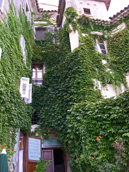 ivy in Eze