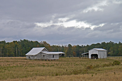 Cotton Fields of Rocky Mount -- October, 2012