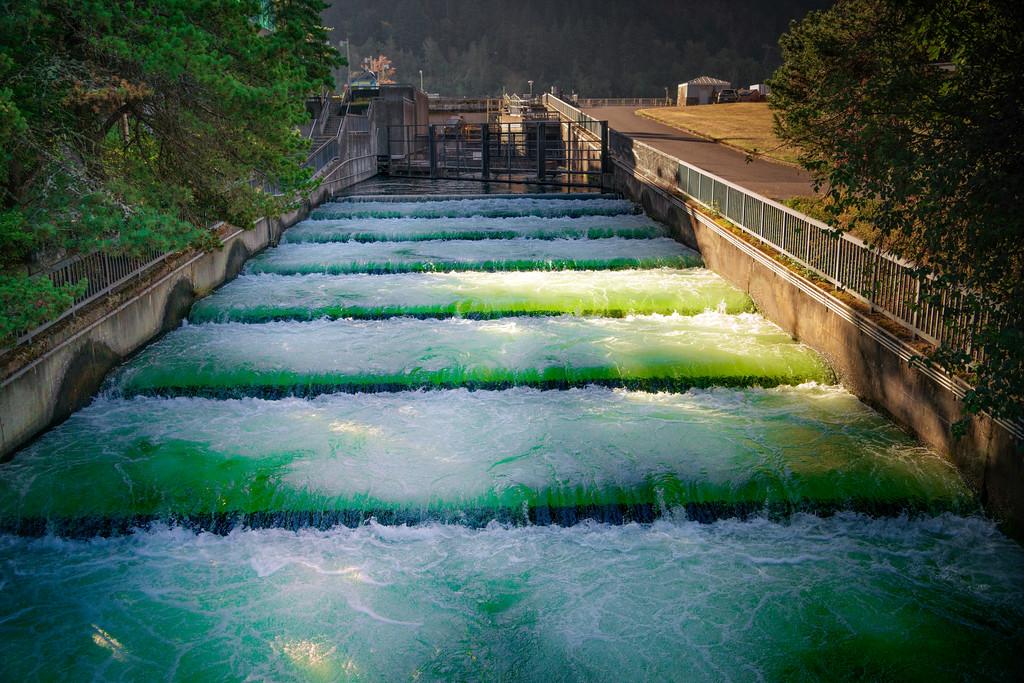 """""""Swimming Upstream"""""""