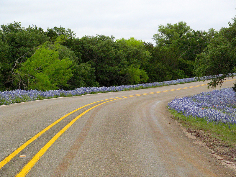 I am sitting on my bike on my way to Dallas from Sunrise Beach Village.  The Bluebonnets were stunning and I couldn't resist this shot.