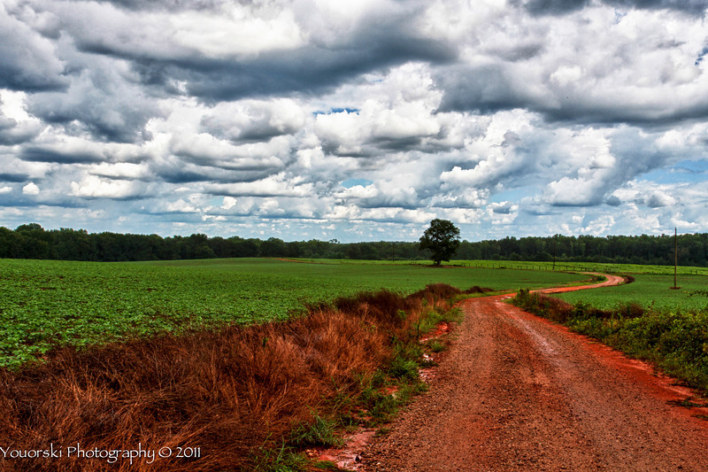 Cottage Road w/a little rain on the red dirt road. Soybeans in the fields.