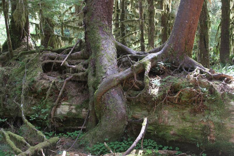 Tree Hugger!