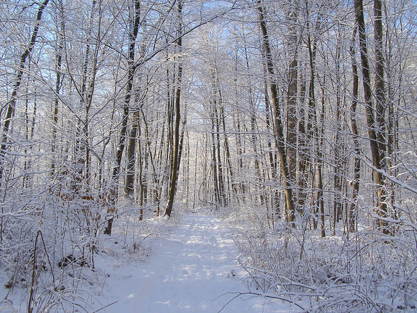 A snowy path through the forest in early morning