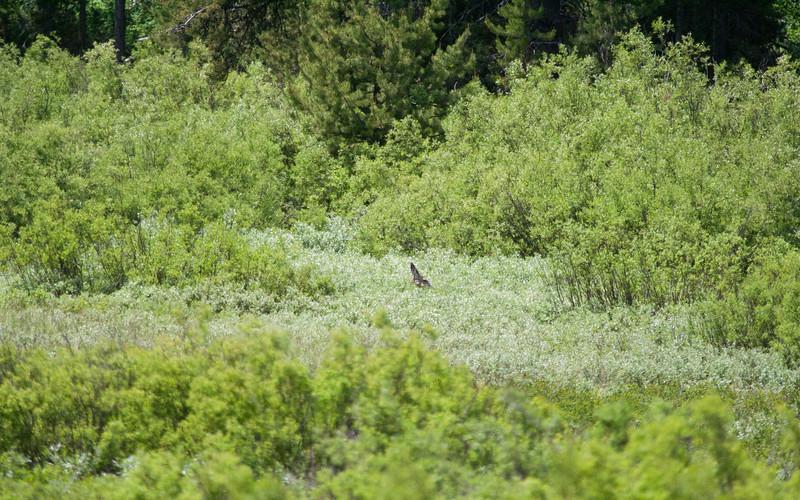 Find the Deer