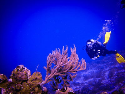 Cozumel; Diving, Punta Sur and the Rugged Coast