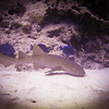Nurse shark, a bottom dwelling small creature which I saw on the first dive of the week. Be sure to check out the video!