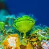 Hydroid - Dive 3 - Palancar Gardens