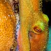 Reef Octopus - Dive 18 - San Francisco