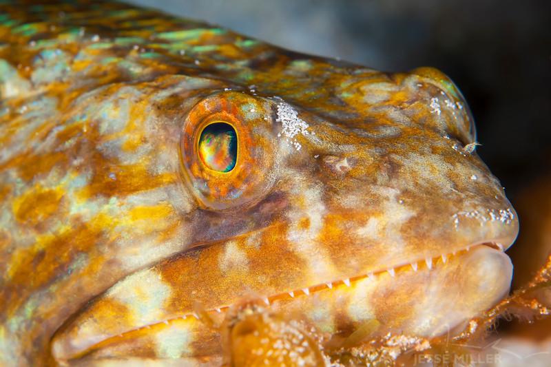 Lizardfish - Dive 5 - Palancar Bricks