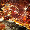 Crab  - Dive 7 - Paso del Cedral
