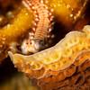 Fireworm - Dive 3 - Palancar Gardens