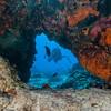 Diver - Dive 15 - Paso del Cedral
