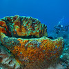 Diver - Dive 16 - Punta Tunich