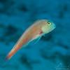 Fish - Dive 20 - Palancar Caves