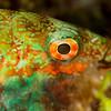 Parrotfish - Dive 8 - Yucab