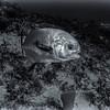 Fish - Dive 15 - Paso del Cedral