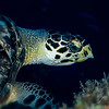 Sea Turtle - Dive 12 - Maracaibo