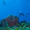 Divers - Dive 15 - Paso del Cedral