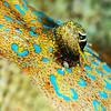 Peacock Flounder - Dive 1 - Villa Blanca Wall