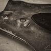 Stingray - Dive 5 - Palancar Bricks