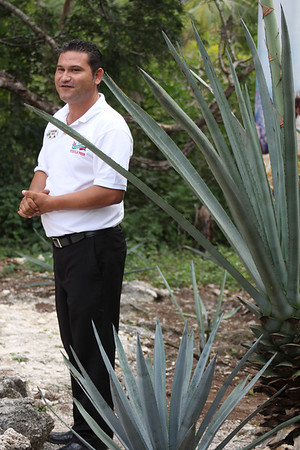 guide explaining about agave plants - tequila must be made from the Weber Blue variety
